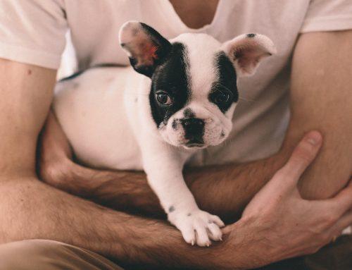 Qué costes supone el veterinario en caso de accidente