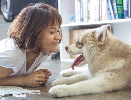 Cómo elegir nombre para un perro: consejos y nombres