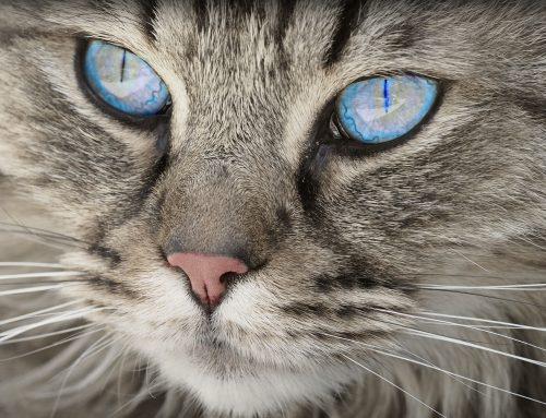 ¿Cuánto cuesta cuidar de un gato?