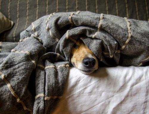 Los cuidados que necesita un perro: consejos para que tu perro se sienta feliz