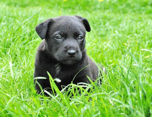 Las 6 enfermedades víricas más comunes en los perros