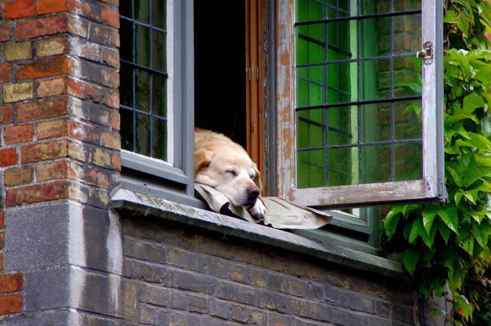 ¿El seguro de hogar cubre a mi mascota?
