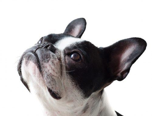 Seguro de responsabilidad civil para perros: ¿es obligatorio en Madrid?