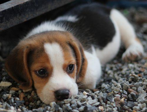 Tipos de seguros para perros: cómo proteger a tu mascota