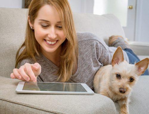 4 ventajas (+ 1) de tener un seguro para perros