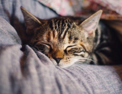 Conjuntivitis en gatos: cómo detectarla y causas