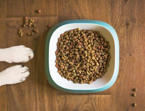 Tipos de alimentación para perros: cómo acertar
