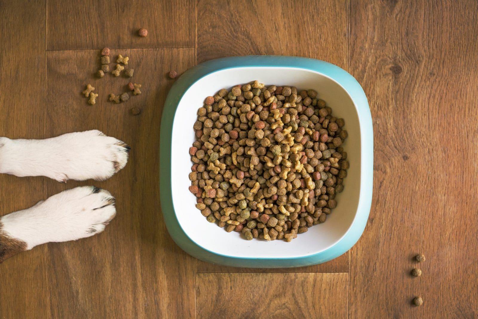 Tipos de alimentación para perros